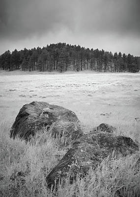Photograph - Meadow Meditation by Alexander Kunz
