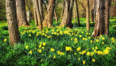 Photograph - Meadow Of Daffodils by Carolyn Derstine