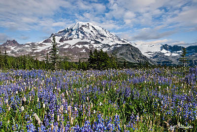 Meadow Of Lupine Near Mount Rainier Art Print