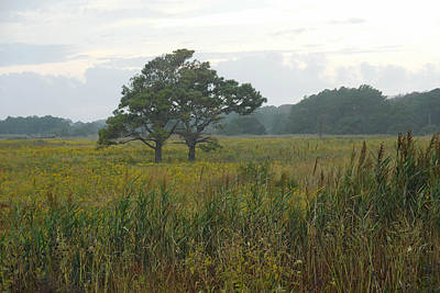 Photograph - Meadow Of Seaside Goldenrod by Captain Debbie Ritter