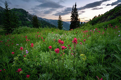 Wasatch Wall Art - Photograph - Meadow Of Wildflowers In The Wasatch by James Udall