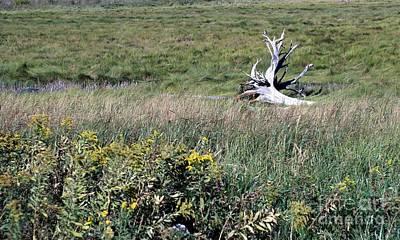 Photograph - Meadow Perch by Marcia Lee Jones