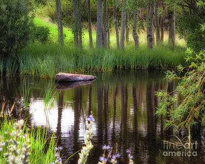 Photograph - Meadow Pond by Anthony Bonafede