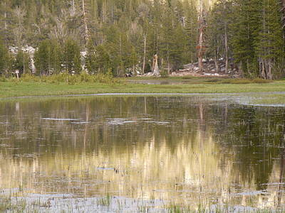 Photograph - Meadow Reflections 2 by Dan Whittemore