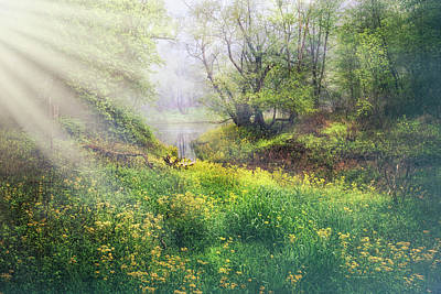 Photograph - Meadow Sunlight Through The Trees by Debra and Dave Vanderlaan