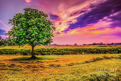 Summer Photograph - Meadow Sunset by Claudia M Photography