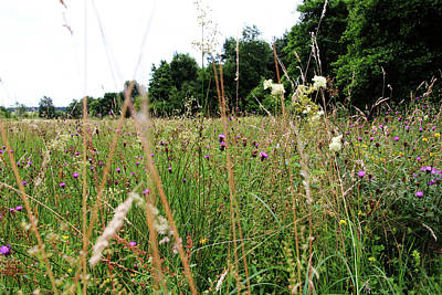Photograph - Meadow by Tom Conway