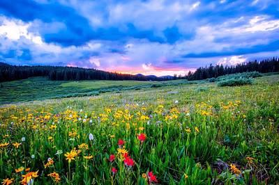 Photograph - Meadow Wildflowers by Unsplash