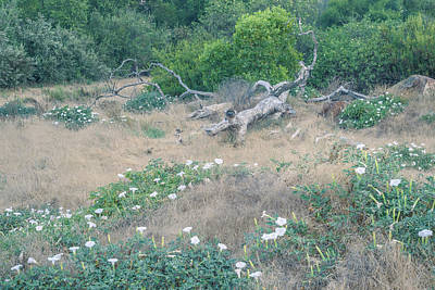 Photograph - Meadow With Dead Oak And Datura by Alexander Kunz