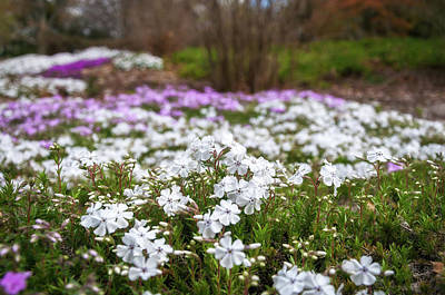 Photograph - Meadow With Flowers At Botanic Garden In The Blue Mountains by Daniela Constantinescu