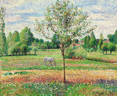 French Signs Painting - Meadow With Grey Horse, Eragny by Camille Pissarro