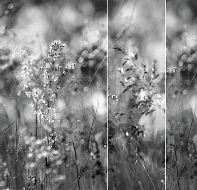 Photograph - Meadowgrasses by Linde Townsend