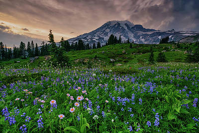 Photograph - Meadows Of Heaven by Dan Mihai