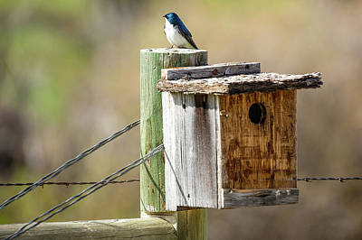 Photograph - Meagher County Swallow by Todd Klassy