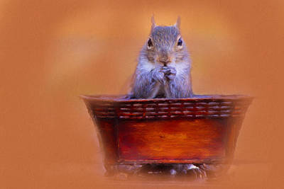 Photograph - Mealtime Prayers Squirrel Art by Jai Johnson