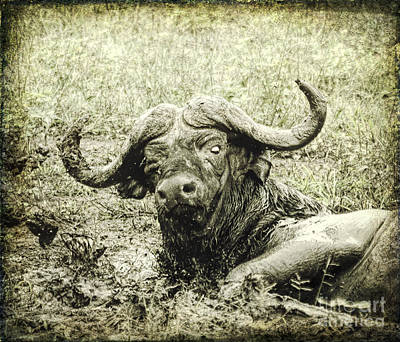 Digital Art - Mean Buffalo by Liz Leyden