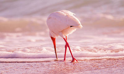 Ibis Wall Art - Photograph - Meandering Beauty Cortez Beach by Betsy Knapp