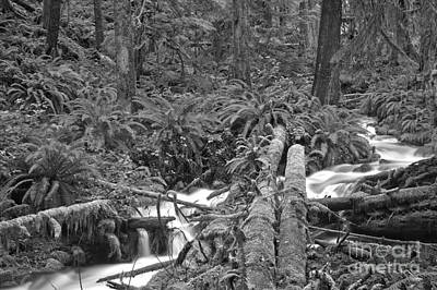 Photograph - Meandering Through The Rainforest - Black And White by Adam Jewell