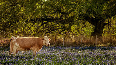 Photograph - Meat Me In The Bluebonnets by Melinda Ledsome