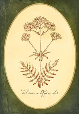 Alternative Medicine Painting - Medicinal Flower Valerian by Little Bunny Sunshine