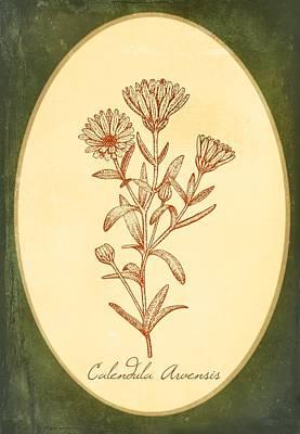 Medicinal Herb Calendula  Art Print by Little Bunny Sunshine