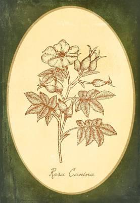 Medicinal Herb Dog Rose Art Print by Little Bunny Sunshine