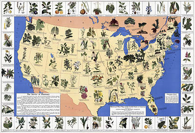 Us Map Photograph Medicinal Plant Map Of The U S 1932 By Daniel Hagerman