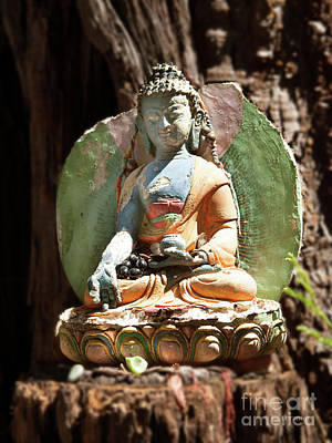 Photograph - Medicine Buddha With Offerings by Carol Lynn Coronios