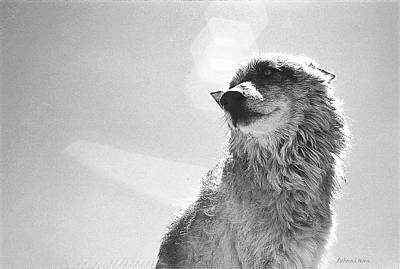 Photograph - Medicine Wolf Omega by Deborah Moen