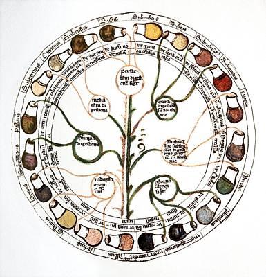 Medicine Wheel Photograph - Medieval Urine Wheel by Sheila Terry