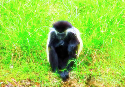 Photograph - Meditating Monkey Celestial Skies by Aimee L Maher Photography and Art Visit ALMGallerydotcom