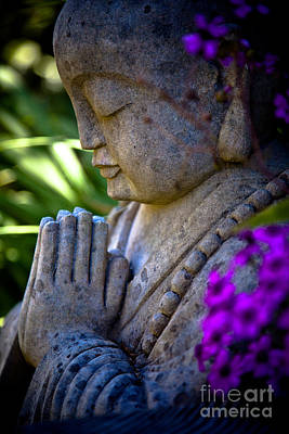 Photograph - Meditation by Derek Selander