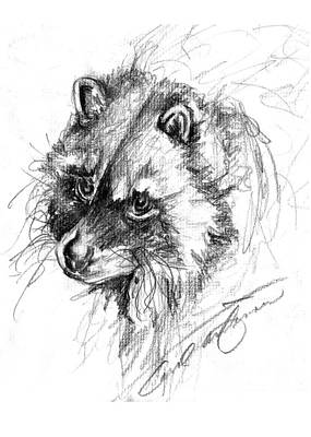 Raccoon Drawing - Meditative Raccoon by Carol Allen Anfinsen