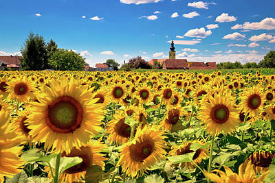 Photograph - Medjimurje Region Landscape And Sunflower Field View by Brch Photography