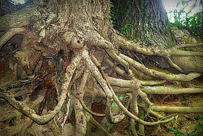 Tree Roots Photograph - Medusa by Cricket Hackmann