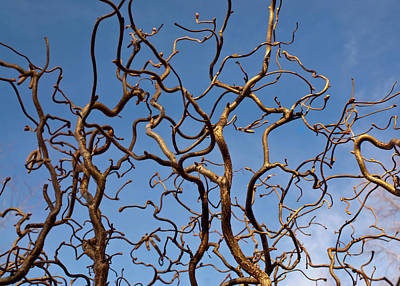 Medusa Limbs Reaching For The Sky Art Print