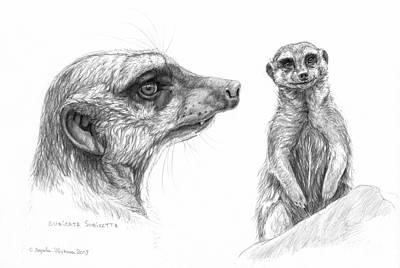 Meerkat Drawing - Meerkat - Suricata Suricatta by Svetlana Ledneva-Schukina