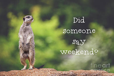 Meerkat Wall Art - Photograph - Meerkat Asking If It's The Weekend Yet by Jane Rix