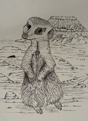 Meerkat Drawing - Meerkat Curiosity by Taylor Black