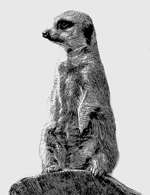 Meerkat Drawing - Meerkat Etching by Greg Noblin