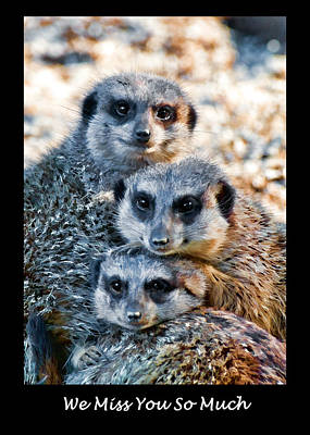 Photograph - Meerkat Family Greeting Card by Ginger Wakem