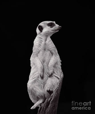 Meerkat Digital Art - Meerkat Sentinel by Cassandra Buckley