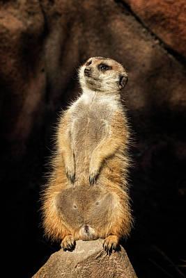 Photograph - Meerkat by Travis Rogers