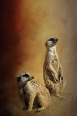 Photograph - Meerkats by Michele Wright