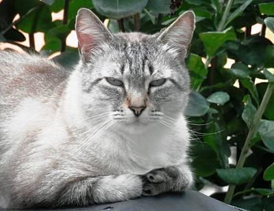 Photograph - Meet Barney The Cat by Belinda Lee