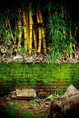 Photograph - Meet Me At The Bamboo 02 by Dora Hathazi Mendes