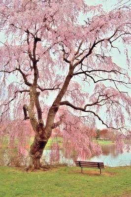 Birthday Gift Ideas Photograph - Meet Me Under The Pink Blooms Beside The Pond - Holmdel Park by Angie Tirado