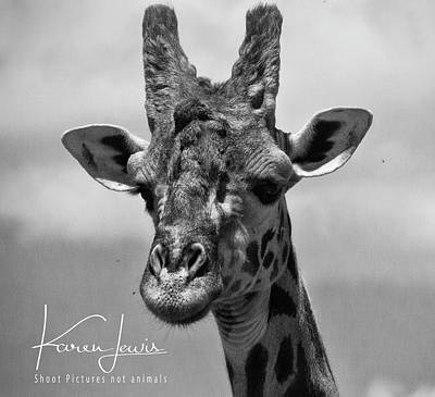 Photograph - Meet Twiggy by Karen Lewis