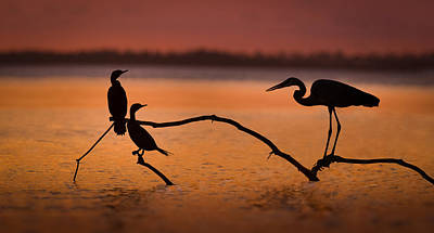 Bird Photograph - Meeting At Sunset by Jean-luc Besson
