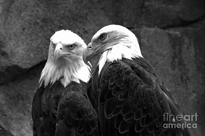 Photograph - Meeting Of The Bald Eagles Black And White by Adam Jewell